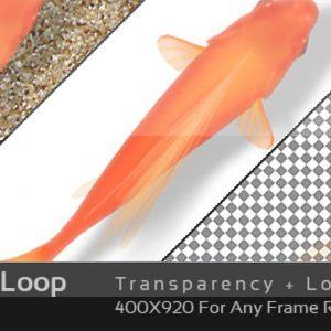 Gold Fish Loop